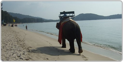 Elephant rides at Bang Tao Beach.