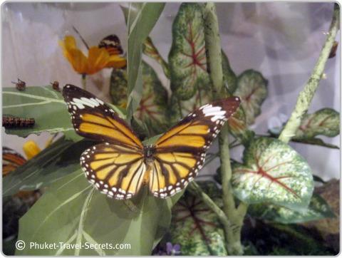 Butterfly found in the garden.