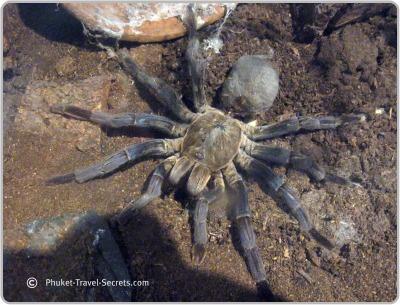 Creepy crawlies found at Insect World in Phuket.