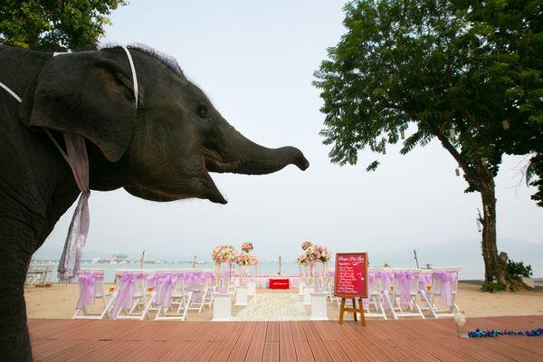 Ivory wedding Phuket