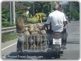 Only in Thailand just remember not to pinch the coconuts.