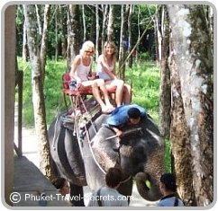 Riding Elephants in Phuket