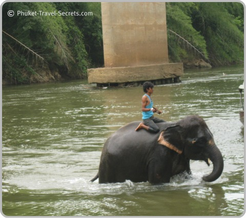 Elephant enjoying a bath in the River Kwai.