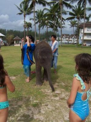 Baby elephant going for a stroll at the Sheraton