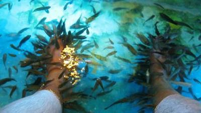 Fish Foot Massage