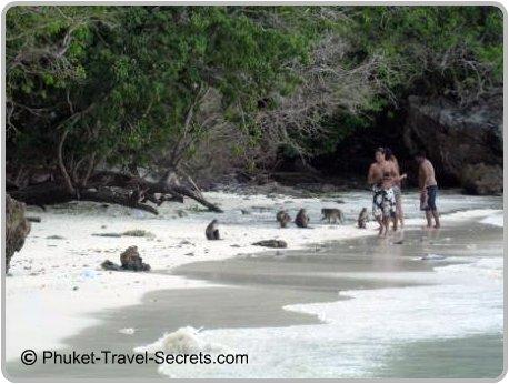 Monkey's at Monkey Beach, Koh Phi Phi