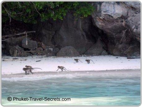 Monkey Beach, Phi Phi Island