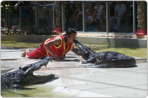 Crocodile show at the Zoo in Phuket.