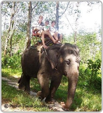Elephant trekking in Phuket with the kids.
