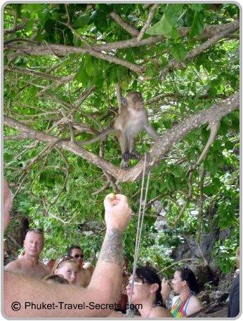 Feeding a monkey at Monkey Beach.